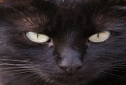 Illustration du profil de mhflechard